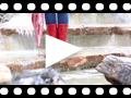 Video from Stivali donna in gomma Mini Glow