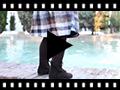 Video from Stivali tronchetti per bambina scamosciati