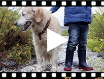 Video from Stivali di gomma bambini Splash Tricolor